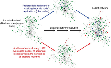 How population size shapes evolution patterns in E. coli